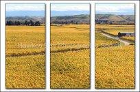 Fields of Gold - John Hanlon