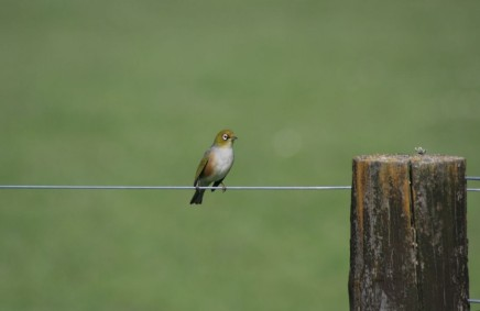 Bird-on-wire2-1024x666