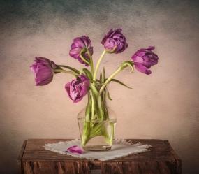 Tulips - Loren O'Connor