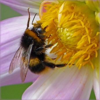 Pollen hunt - Jillian Selkirk