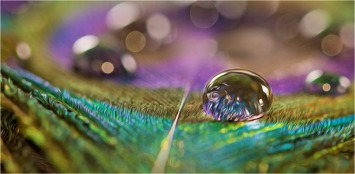 Peacock colours in a droplet - Kirsteen Redshaw