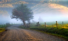 Robin Cranford - Misty morning on the farm