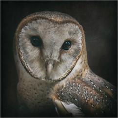 Kirsteen Redshaw - Edmon
