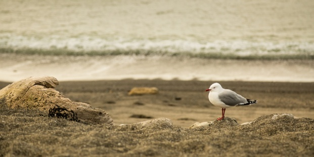 Robin Cranford - At the Seaside