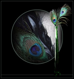Trish Johnston - Feathers