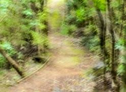 Enchanted pathway